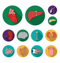 human organs flat icons in set collection for vector image