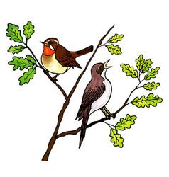 Nightingales sing vector