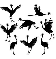 set of grey crowned cranes vector image
