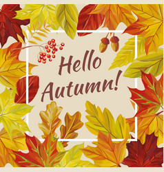 slogan hello autumn leaves rowan acorn vector image