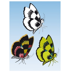 three butterflies vector image