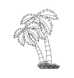 isolated beach palm vector image