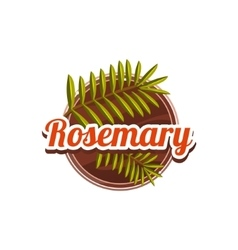 Rosemary spice vector