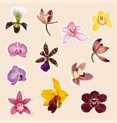 set tropical orchids flowers elements vector image