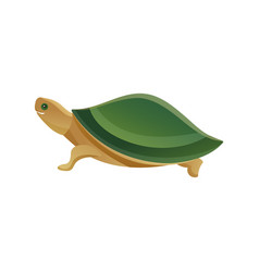tortoise pet shop animal vector image
