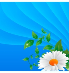 Daisy on a abstract background vector