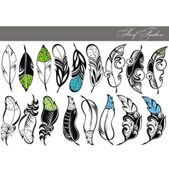 Feather collection vector