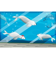 Seals and dolphins swimming in aquarium vector image