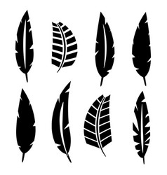 set of bird feathers vector image