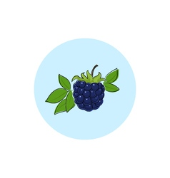 Icon colorful blackberry vector