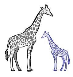 giraffe line art vector image vector image