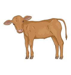 Cartoon calf side view vector