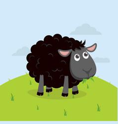 Cute black sheep eat grass cartoon vector