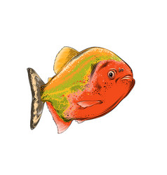 drawing fish in color isolated on white vector image