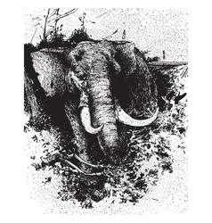 Elephant hunting vintage vector