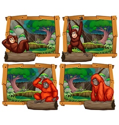 Four scenes of monkey in the jungle vector image