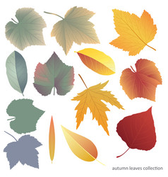 Leaves collect-01 vector