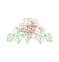 rose flower twig vector image