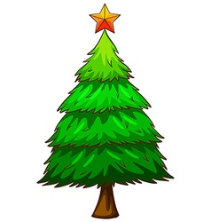 A coloured sketch of a pine tree vector