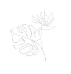 Decorative hand drawn strelitzia flower and vector