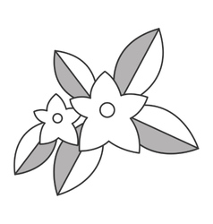 Jasmine flowers icon vector