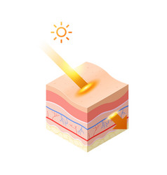 Uv ray from sun penetrate into epidermis skin vector
