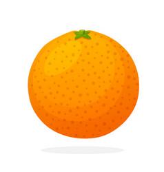 Whole grapefruit vector