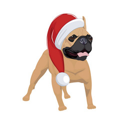french bulldog with christmas hat isolated on vector image