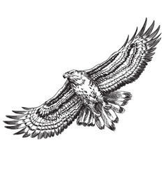 hand drawn hawk vector image vector image
