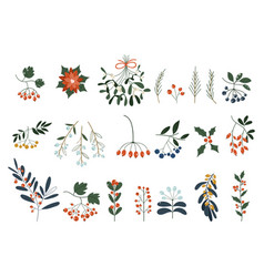 set plants with flowers spruce branches vector image