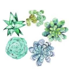 Watercolor succulent collection vector