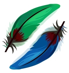 Blue and green bird feather on white background vector image