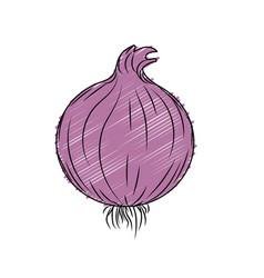 Fresh onion natural vegetable nutrition vector