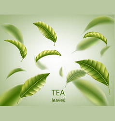 Realistic tea leaves background green leaves tea vector