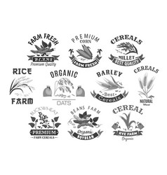grain and cereal product farm market icons vector image