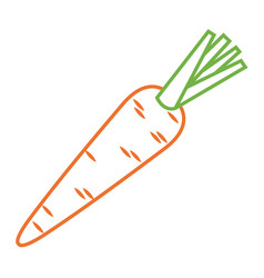 carrot vegetable tasty ripe icon vector image