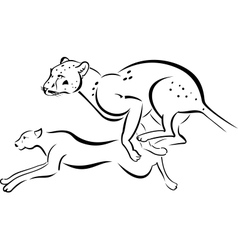Two running Leopard vector image vector image