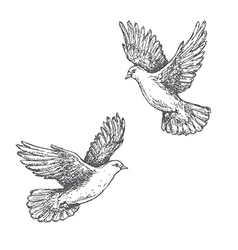 Doves sketch vector