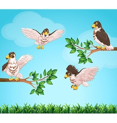 Four eagles flying in sky vector