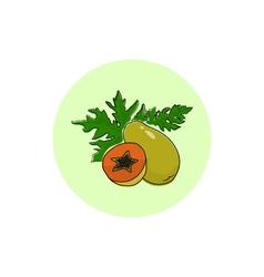 Icon Colorful Papaya vector