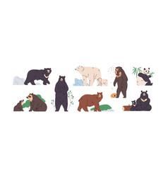 set brown polar black himalayan malay vector image