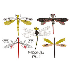 set folk art decorated dragonflies vector image