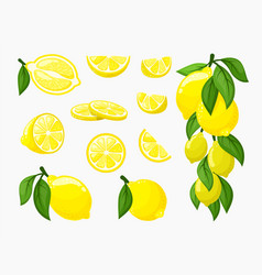 set lemons yellow citrus fresh vector image