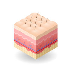 Skin with cellulite and hair cross-section of vector