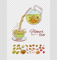 tea constructor flowers brew process make vector image