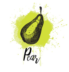 A pear hand drawn graphics vector