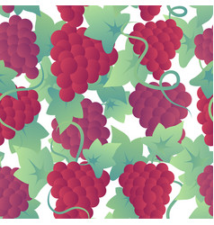 Winery pattern with bunches grapes vector