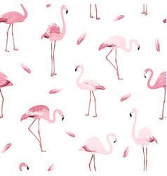 pink flamingo birds flamboyance feather pattern vector image vector image