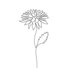 Chrysanthemum flower on white vector