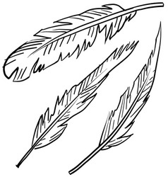 doodle feathers vector image